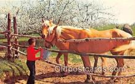 hor001623 - Feeding Time Color by APA Postcard Post Card