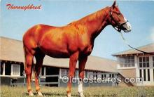 hor001634 - Thoroughbred Color by Dexter Press, Inc Postcard Post Card