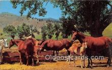 hor001636 - Horse Ranch Free Lance Photographers Guild, Inc Postcard Post Card
