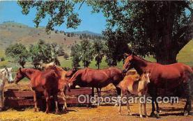 hor001636 - Horse Ranch Free Lance Photographers Guild, Inc Postcard Post Card