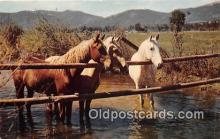 hor001637 - Waterhole  Postcard Post Card