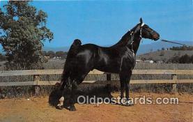 hor001638 - Champion Walking Horse Photo by Joyce L Haynes Postcard Post Card