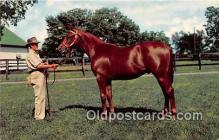 hor001639 - Yearling Ready for Sale Keeneland Race Course, Lexington, KY Postcard Post Card