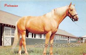 hor001640 - Palomino Color by Dexter Press, Inc Postcard Post Card