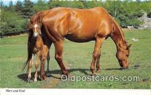 hor001642 - Mare & Foal Mike Roberts Color Productions Postcard Post Card