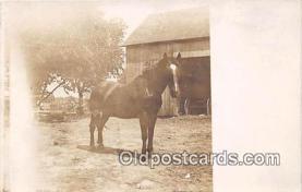 hor001643 - Postcard Post Card