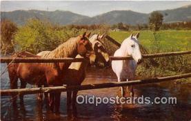 hor001644 - Waterhole  Postcard Post Card