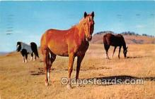 hor001648 - Horses in the Pasture  Postcard Post Card