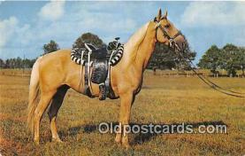 hor001651 - Palomion Pony  Postcard Post Card