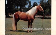 hor001658 - Palomion Stallion Color by CP Johnson Postcard Post Card