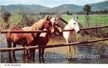 hor001659 - Waterhole  Postcard Post Card