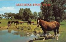 hor001663 - Greetings from Texas Color by Jerry Hodge Postcard Post Card
