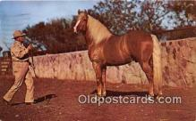 hor001666 - Palomino  Postcard Post Card