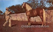 hor001672 - Palomino & His Trainer Ranches in Oklahoma Postcard Post Card