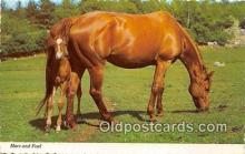 hor001673 - Mare & Foal  Postcard Post Card