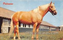hor001674 - Palomino  Postcard Post Card