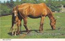 hor001676 - Mare & Foal Alfred Mainzer, Inc Postcard Post Card