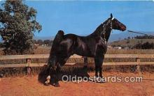 hor001679 - Champion Walking Horse Photo by Joyce L Haynes Postcard Post Card