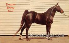hor001681 - Tennessee Walking Horse Color by CH Ruth Postcard Post Card