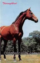 hor001690 - Thoroughbred Color by Dexter Press, Inc Postcard Post Card