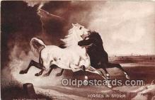 hor001699 - Horses in Storm  Postcards Post Cards Old Vintage Antique