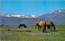 hor001707 - Spring Pasture  Postcards Post Cards Old Vintage Antique