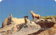 hor001709 - Wild Palomino Stallion  Postcards Post Cards Old Vintage Antique