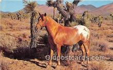 hor001710 - Appaloosa Pony, Desert Mojave Desert Postcards Post Cards Old Vintage Antique