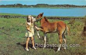 hor001723 - Shake Pardner  Postcards Post Cards Old Vintage Antique