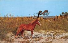 hor001724 - Wind Outer Banks Pony, Ocracoke Island North Carolina, USA Postcards Post Cards Old Vintage Antique