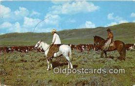 hor001725 - Postcards Post Cards Old Vintage Antique