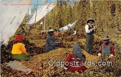 Indians Picking Hops