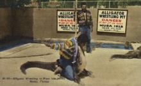 ind000589 - Musa Isle Indian Village, Miami Florida USA, Alligator Wrestling Indian, Indians Postcard Postcards