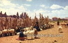 ind200380 - Navajo Sheep Herd Indian Postcard, Post Card