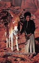 ind300058 - Navajo Lass & Her Burro  Postcard Post Cards