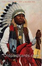 Chief White Tail