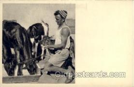 jud001572 - A Kvutzah Idyll Judaic, Judaica Postcard Postcards