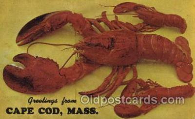 lob001009 - Cape Cod, Mass, USA Lobster Postcard Postcards