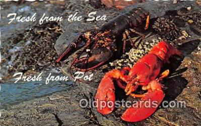 lob001094 - Fresh from the Ocean, Fresh from the Pot  Postcard Post Card