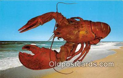 lob001100 - Cape Cod Massachusetts Postcard Post Card