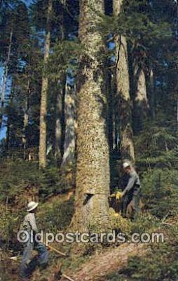 Timber Falling