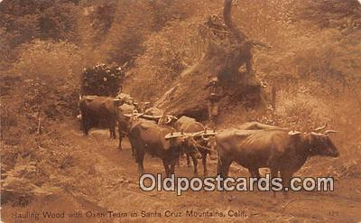 Hauling Wood, Oxen Team