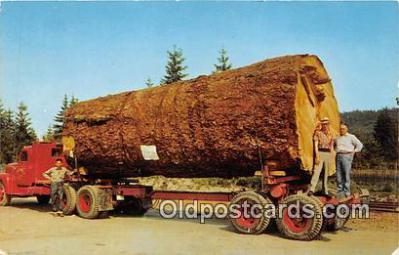Giant Fir Log