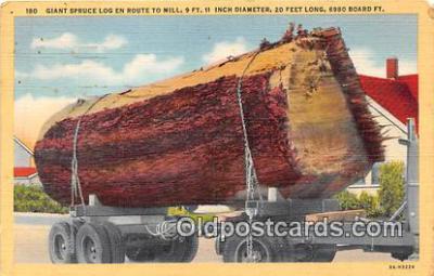 Giant Spruce Log