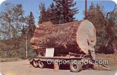 Sitka Spruce Log
