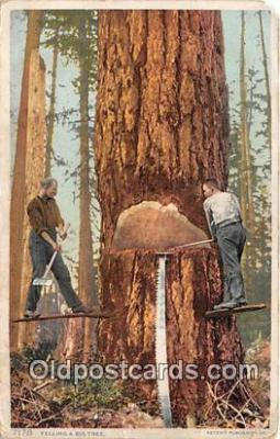 Felling a Big Tree