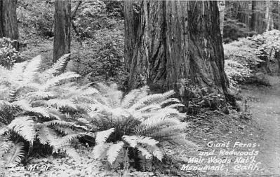 log001209 - Logs, Logging, Timber, Old Vintage Antique Postcard Post Card, Postales, Postkaarten, Kartpostal, Cartes, Postkarte, Ansichtskarte