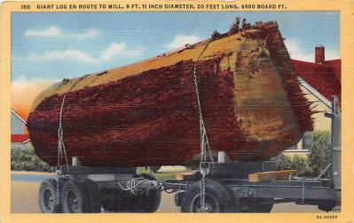log001218 - Logs, Logging, Timber, Old Vintage Antique Postcard Post Card, Postales, Postkaarten, Kartpostal, Cartes, Postkarte, Ansichtskarte
