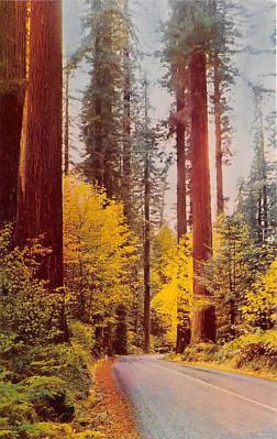 log001237 - Logs, Logging, Timber, Old Vintage Antique Postcard Post Card, Postales, Postkaarten, Kartpostal, Cartes, Postkarte, Ansichtskarte