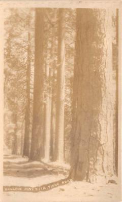 log001299 - Logs, Logging, Timber, Old Vintage Antique Postcard Post Card, Postales, Postkaarten, Kartpostal, Cartes, Postkarte, Ansichtskarte